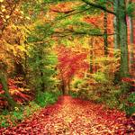 Lightbox Autumn
