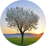 Leuchtkasten Frühling