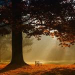 Lightbox park bench