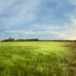 Lightbox meadow
