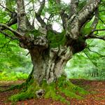 Lightbox Trees