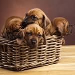 Lightbox Dogs