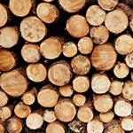 Leuchtkasten Holz