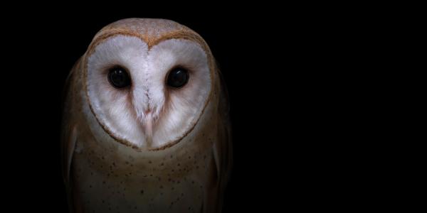 Discover amazing animal portraits