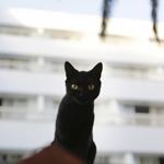 Leuchtkasten Katzen