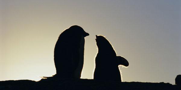 Discover Antarctica at PantherMedia